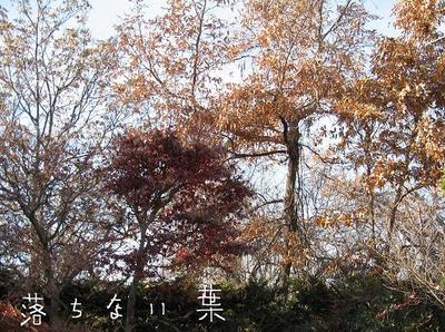 Img_0459_2_blog